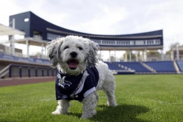 Hank the Brewers Team Dog